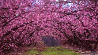 beautiful-spring-photos-1.jpg