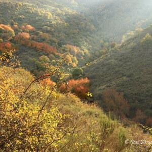 las luces del otoño